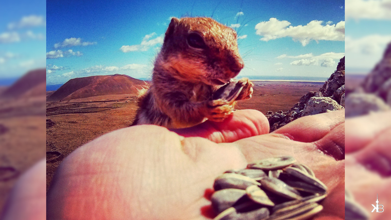 hungry and brave little rodents from El Cotillo   kleppiberlin.de
